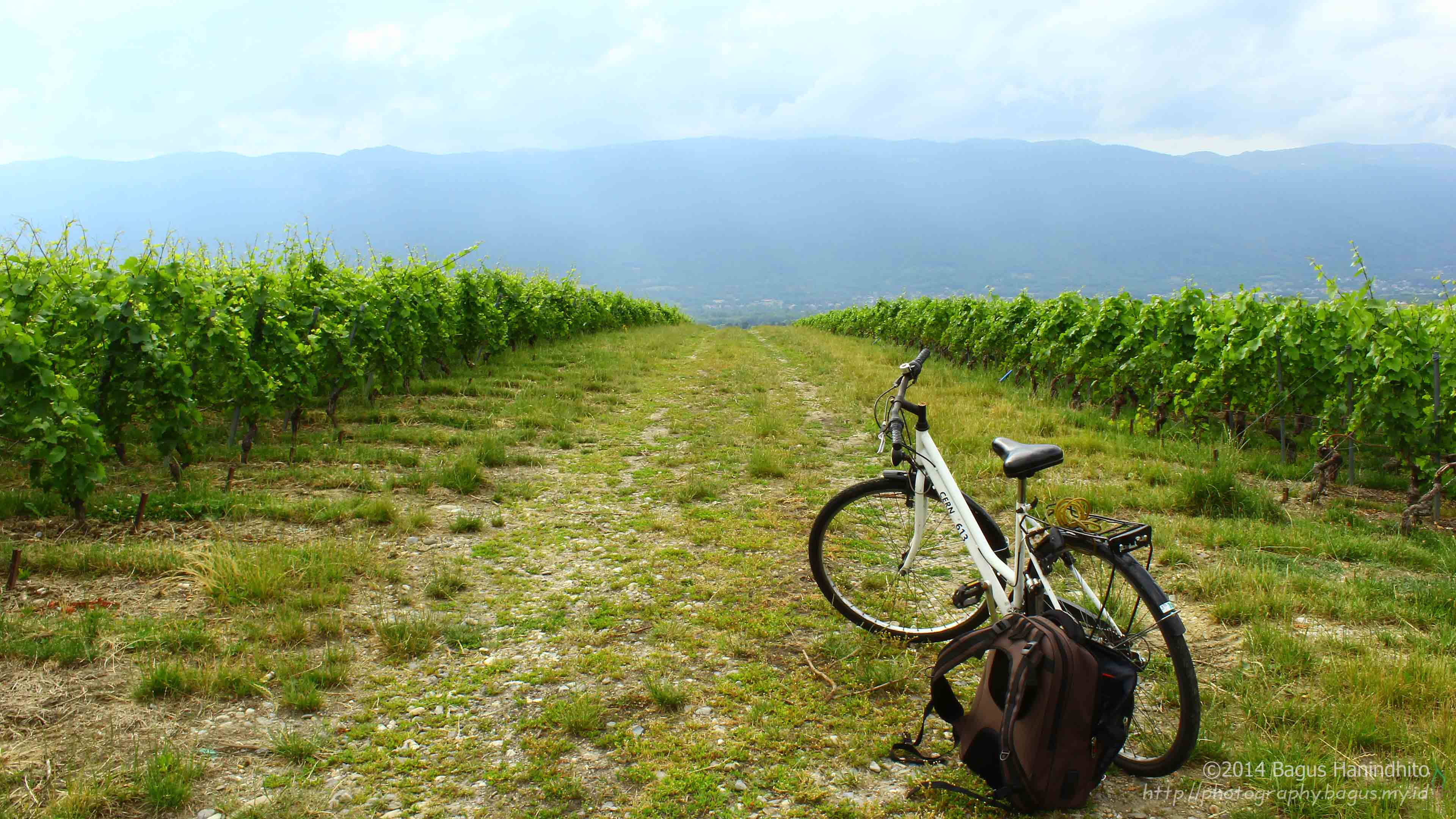 Exploring Wine Garden Nearby using CERN Bicycle!